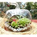 Küçük elma teraryum taş bahçe small