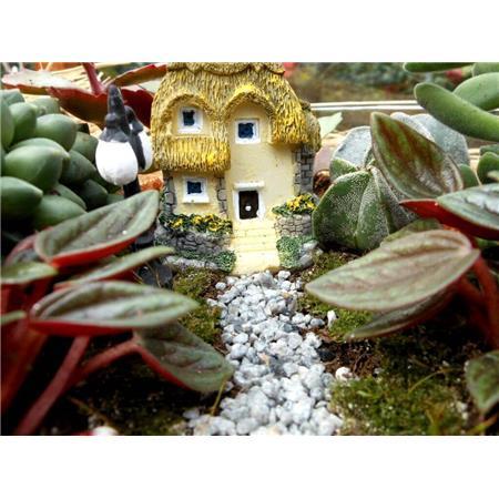 Bahçeli sarı ev teraryum-1
