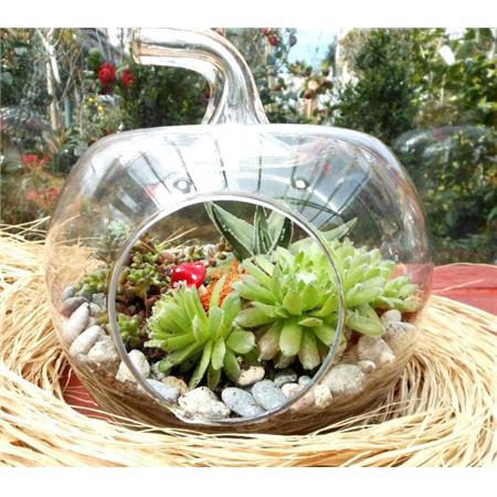 Küçük elma teraryum taş bahçe